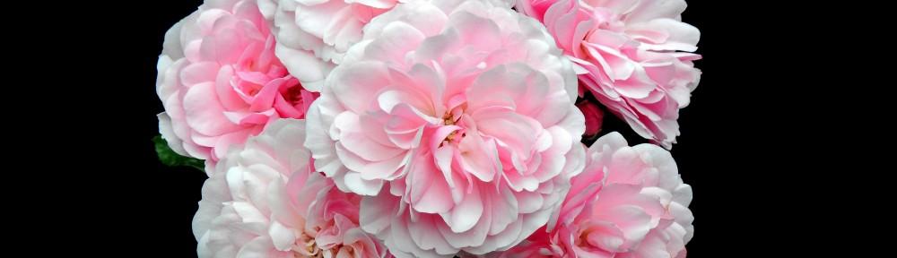 Philadelphia Rose Society